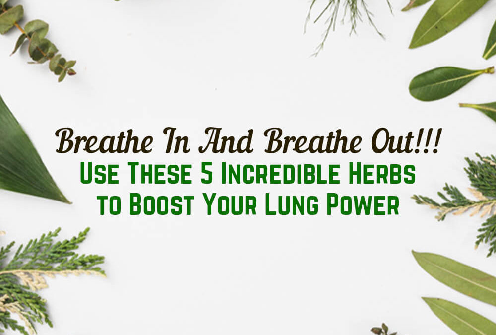 Breathe In And Breathe Out!!! Use These 5 Incredible Herbs to Boost Your Lung Power