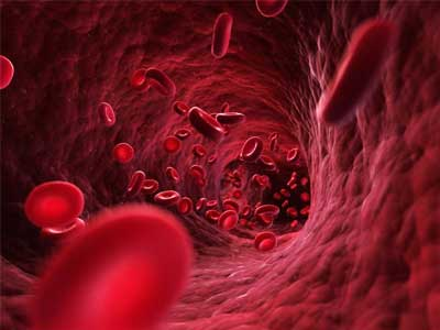 Your Blood Volume Increases